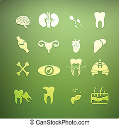 icons of internal human Retina Vector