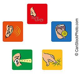 five senses - icons that represent the human five senses
