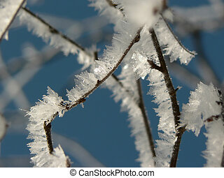 An icy branch