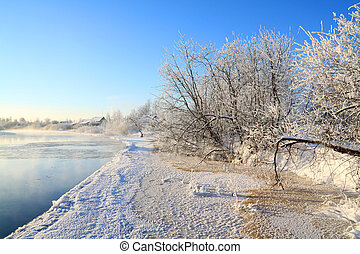 icy bushes