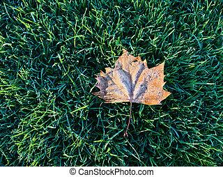 icy elm leaf