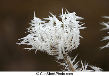 Icy flower