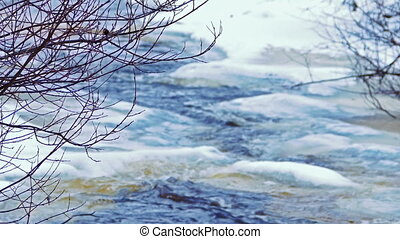 Icy Forest River in a Cold Day, Focus on Tree Branches
