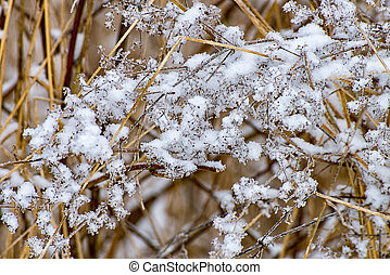 icy meadow in the winter