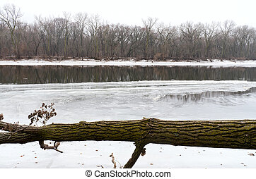 Icy Mississippi River and Fallen Tree in Park