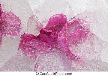 icy plants