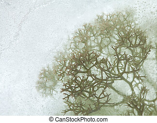 icy plants - plants frozen into ice, change of seasons