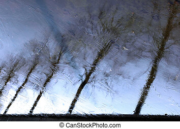 Icy reflection - Trees reflection on ice. Looks like a...