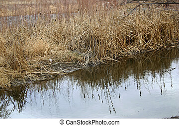 Icy Reflections - Reflections of reeds and cattails in an ...
