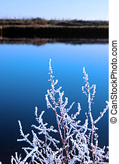 icy twigs in snow against cold blue sky and river