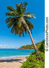 idílico, paraíso, palma, anse, mayor, playa, -, isla de mahe, seychelles