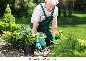 idősebb, ember, dolgozó, alatt, kert