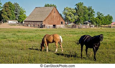 idaho, boerderij, met, paarden, en, een, schuur