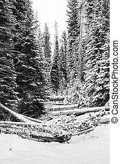 Idaho wilderness in winter with a forest and deadfall
