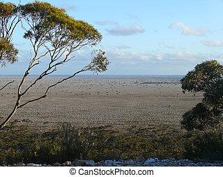 Ideal flat savannah. Western Australia, near Eucla.