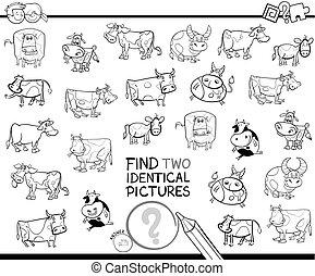 identico, educativo, colorare, due, libro, mucche, trovare