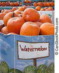 Identity Crisis - Pumpkins in a large cardboard box that is...