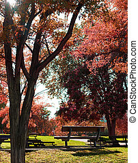 park bench and trees - Idilic image of park bench and trees