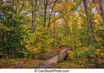 idilliaco, legno, camminare, ponte, in, uno, foresta, durante, autunno, con, fogli caduta