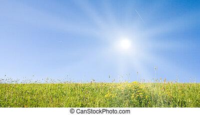 idilliaco, prato, con, luce sole