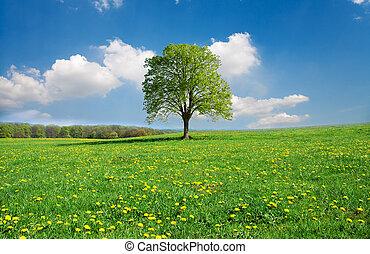 idilliaco, primavera, paesaggio