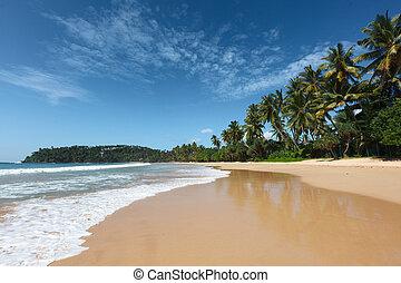 idilliaco, spiaggia., sri lanka