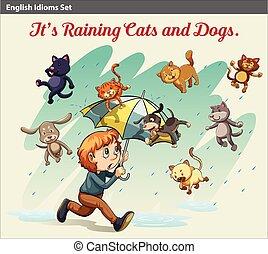 idiom, kiállítás, állatok, eső