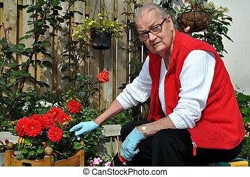 idoso, senhora, jardinagem