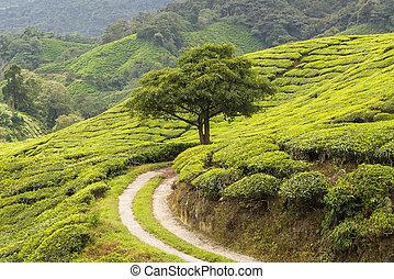 idylic scenery with tree