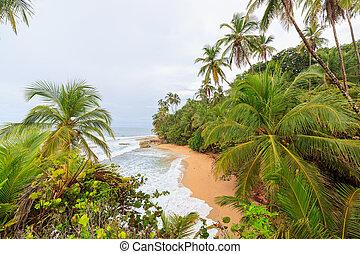 idylický, pláž, manzanillo, kostarika