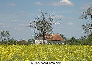 Idyll - canola, rape and a litle house