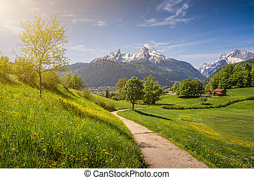 Idyllic alpine landscape with blooming meadows and snow-covered mountain tops