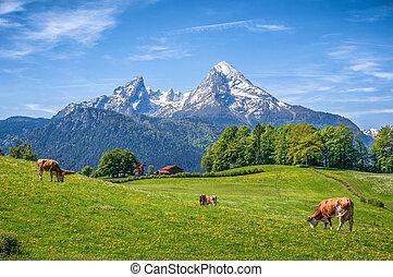 Idyllic alpine summer landscape with cow grazing in fresh meadows