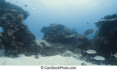 Idyllic coral reef - An idyllic underwater shot of a coral...