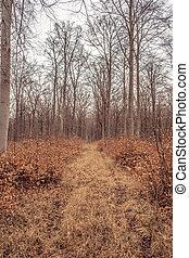 idyllic forest in autumn