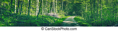 Idyllic green forest with a road