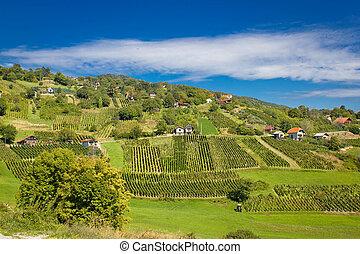 Idyllic green hill vineyards area - Idyllic green hill...