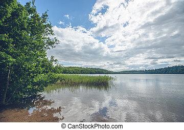 Idyllic lake with green trees