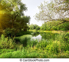 Idyllic river landscape in the forest in sunny morning