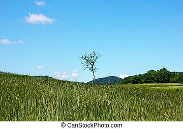 Idyllic landscape with single tree on field