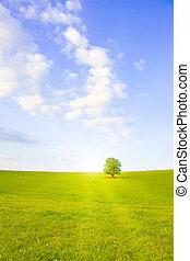 Idyllic meadow with tree - Idyllische Wiese mit Baum