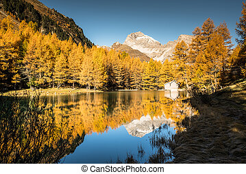 idyllic mountain lake in fall colors with reflections