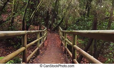 Idyllic rain forest scenery. Wooden bridge and footpath. ...