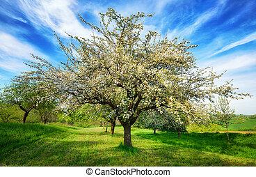 Idyllic rural landscape at springtime