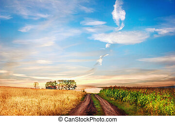 Idyllic rural landscape with road between two fields.
