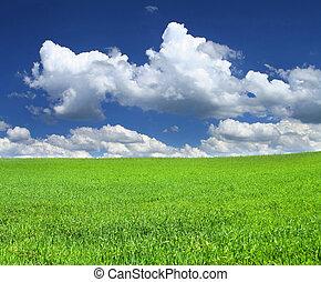 idyllic scenery - beautiful green summer field with a few...