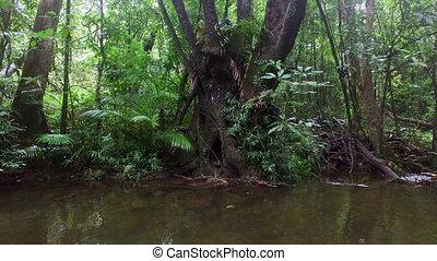 Idyllic shot of a tree trunk