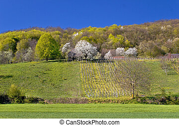 Idyllic springtime hill vineyard and nature, Kalnik...