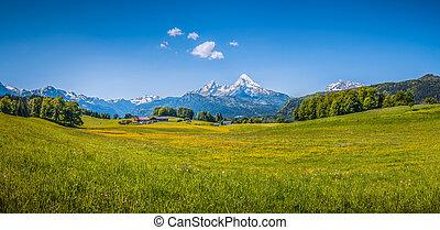 Idyllic summer landscape in the Alps