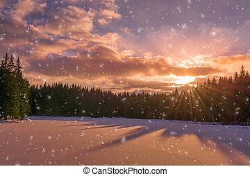 winter forest in the sunlight with snow